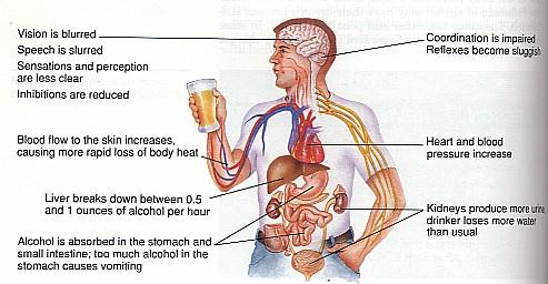 alcohol- efffffect2